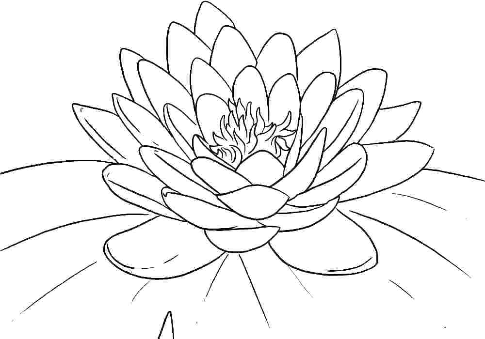 1000x700 Printable Coloring Pages Flowers Professional