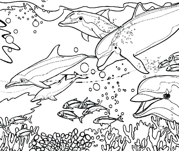 Printable Dolphin Coloring Pages At Getdrawings Com Free For