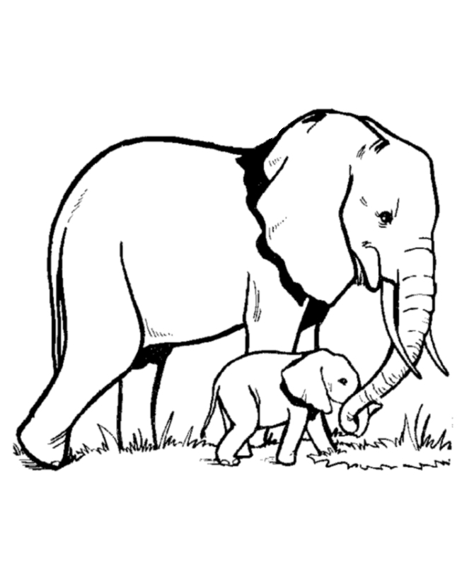 670x820 Elephant Coloring Pages Printable Printable Coloring Pages