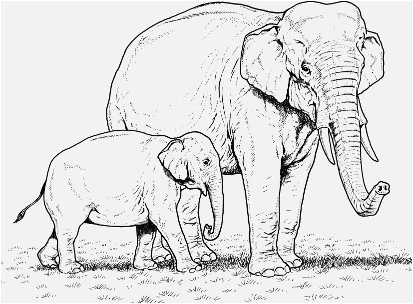 827x609 Printable Elephant Pictures Pictures Elephant Coloring Pages