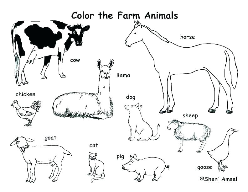792x612 Zoo Animal Coloring Page Free Printable Farm Animal Coloring Pages