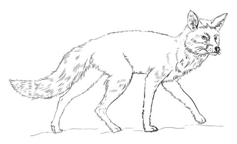480x292 Fox Colouring Page Realistic Red Fox Coloring Page Free Printable