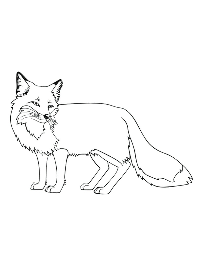 800x1035 Free Printable Fox Coloring Pages For Kids