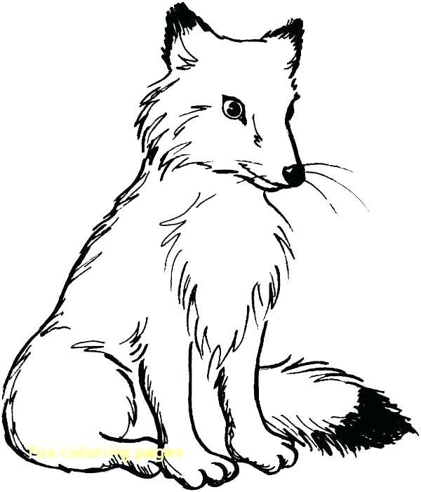 600x701 Fox Coloring Pages Free Printable