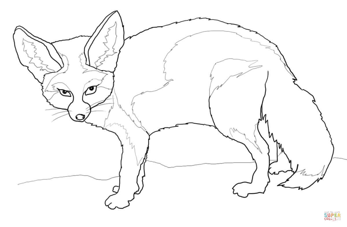 1200x784 Compromise Fennec Fox Coloring Page Free Print