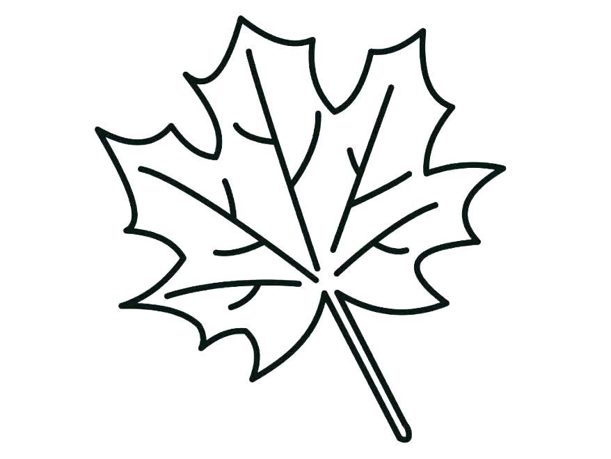 Printable Leaf Coloring Pages At Getdrawings Free Download