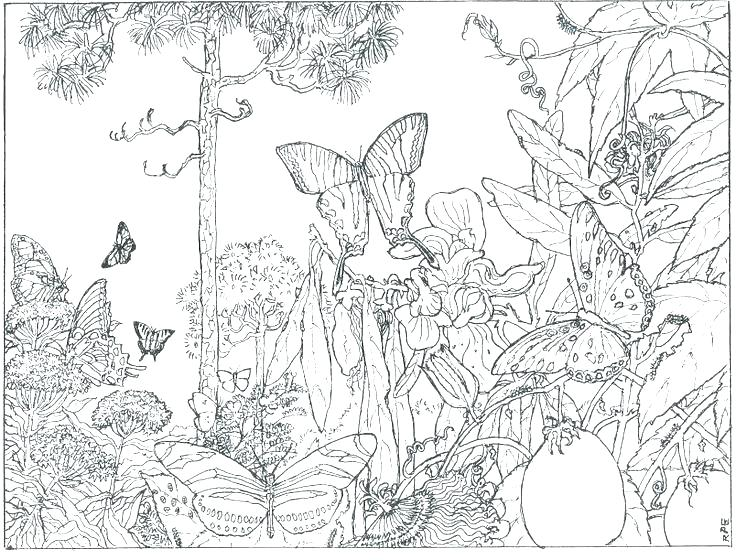 Printable Rainforest Coloring Pages