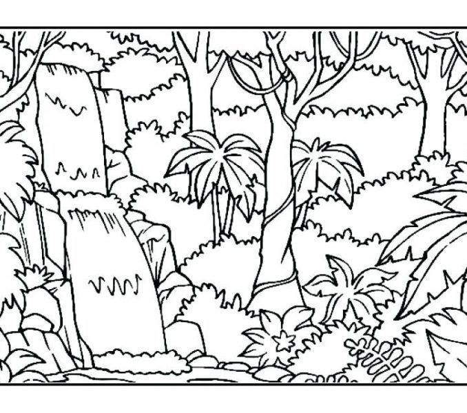 678x600 Printable Rainforest Coloring Pages Coloring Page Ideas