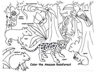 320x240 Printable Rainforest Coloring Pages Amazon Rainforest Animals