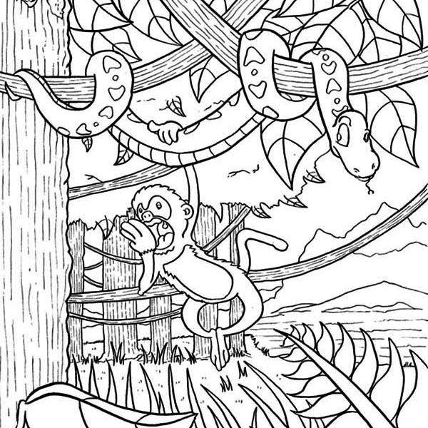 600x600 Printable Rainforest Coloring Pages Amazon Rainforest Coloring