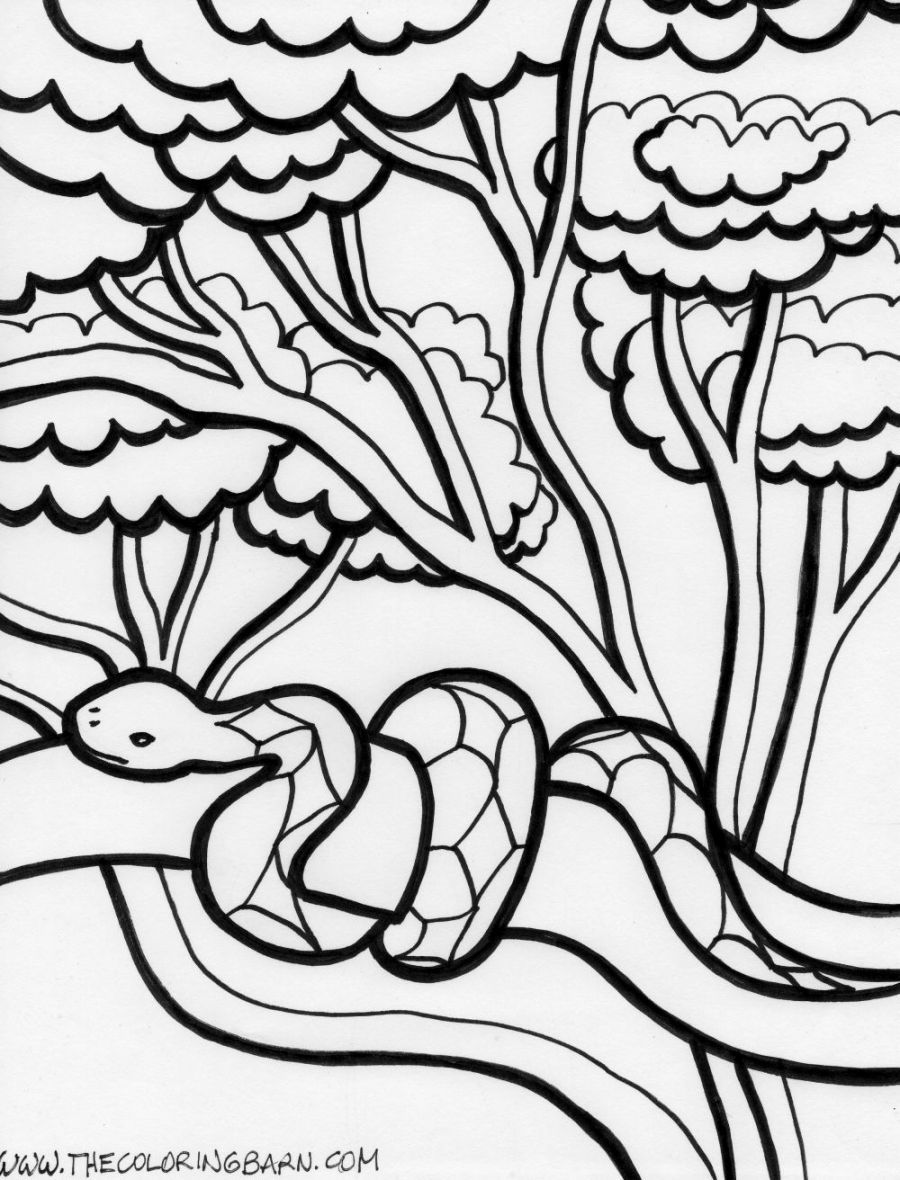 900x1180 Rainforest Coloring Page Coloring Pages Kids