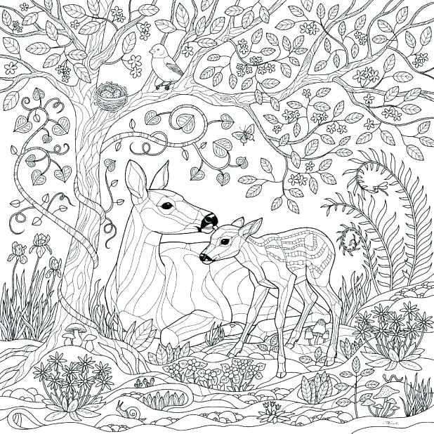 618x618 Rainforest Coloring Page Forest Coloring Pages Printable Deer