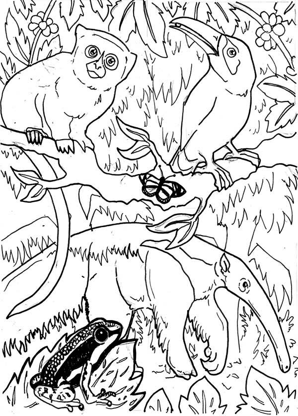 600x837 Bright Idea Amazon Rainforest Coloring Pages Animals Printable