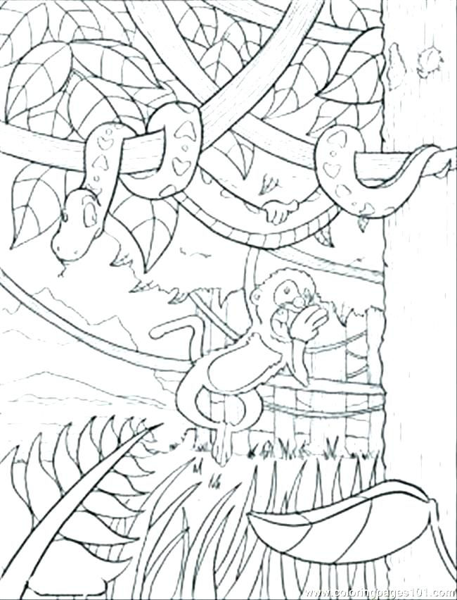 650x852 Rainforest Coloring Pages Printable Tropical To Print Page
