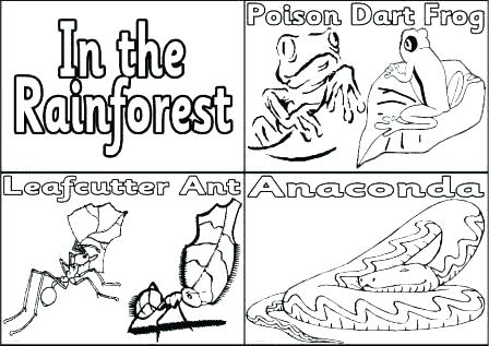 448x317 Rainforest Coloring Pages To Print Rain Forest Coloring Pages