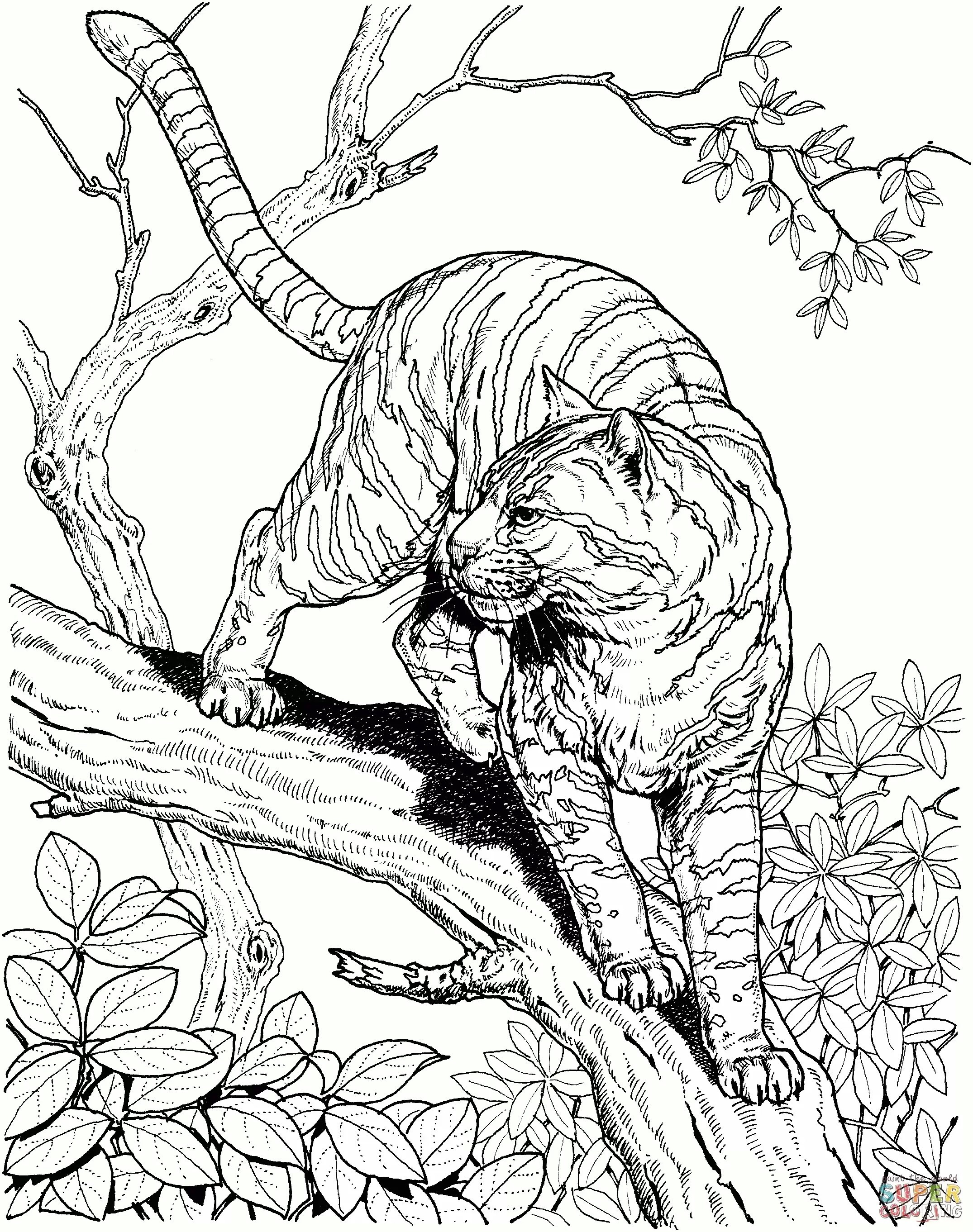 2150x2723 Rainforest Coloring Pages To Print Inspiration Rainforest Coloring