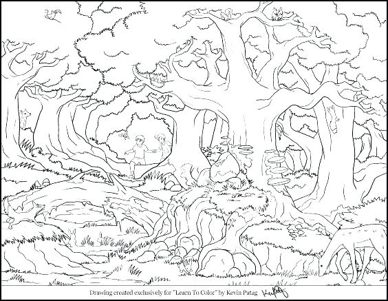 564x437 Coloring Pages Collection Forest Coloring Sheet Forest Coloring