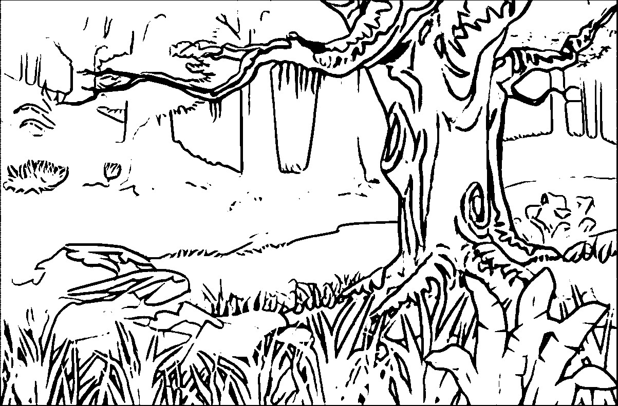 1203x791 Temperate Rainforest Coloring Pages New Forest Coloring Pages