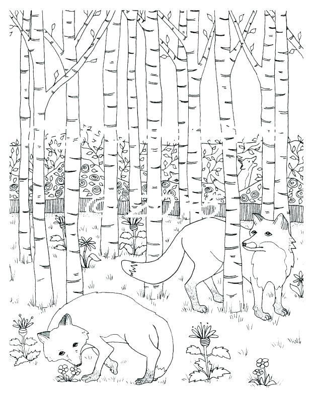 618x800 Tropical Rainforest Coloring Pages Cartoon Coloring Pages Coloring