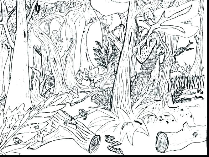 667x500 Tropical Rainforest Printable Coloring Pages