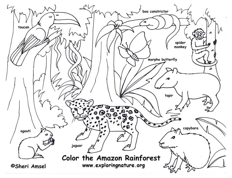 792x607 Enchanting Amazon Rainforest Coloring Pages Animals Printable