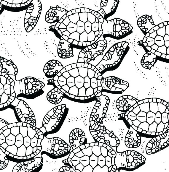 570x582 Printable Turtle Coloring Pages Coloring Pages Ninja Turtles Kids
