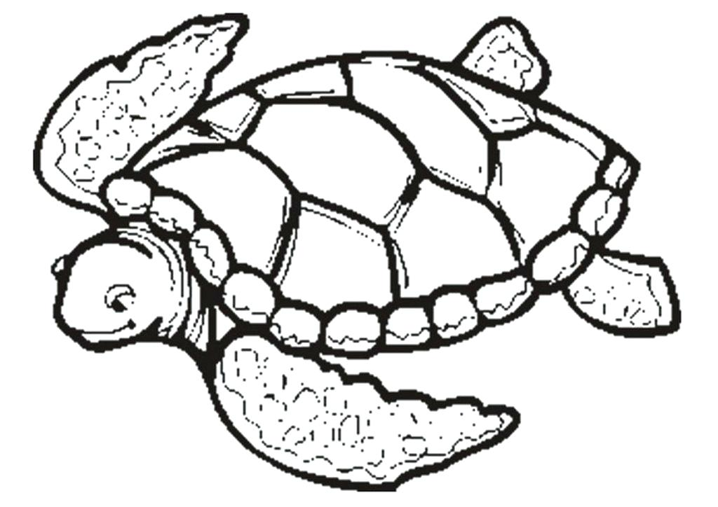 1024x724 Printable Turtle Coloring Pages Sea Turtle Coloring Pages