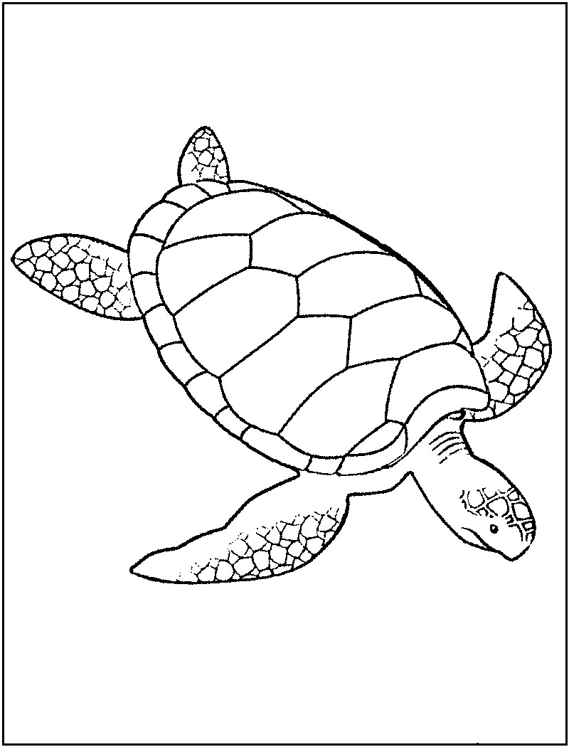 800x1050 Coloring Pages Of Baby Sea Turtles New Free Printable Turtle