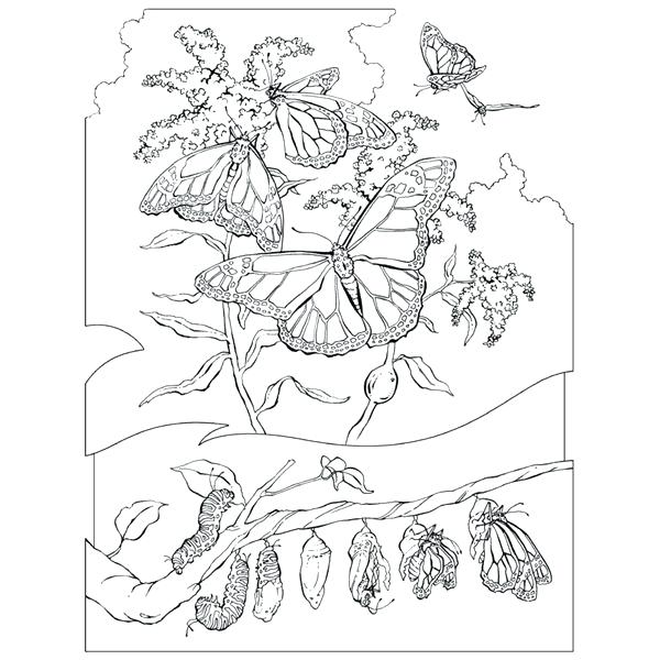 600x600 Realistic Animal Coloring Pages With Realistic Animal Coloring