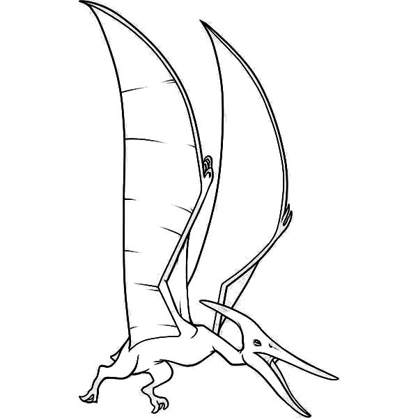 600x600 Pteranodon Screaming Coloring Page Coloring Sun