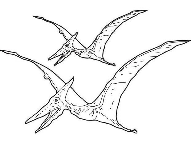 620x465 Pterosaur Coloring Pages