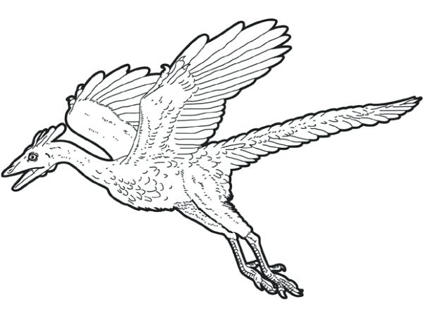 600x450 Pterodactyl Coloring Page Pterodactyl Coloring Pages Dinosaurs