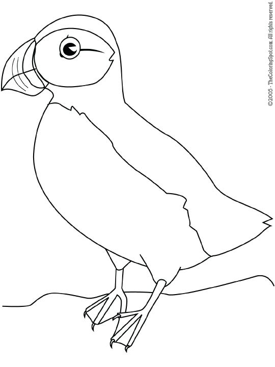 540x720 Puffin Coloring Page Puffin Puffin Rock Coloring Pages