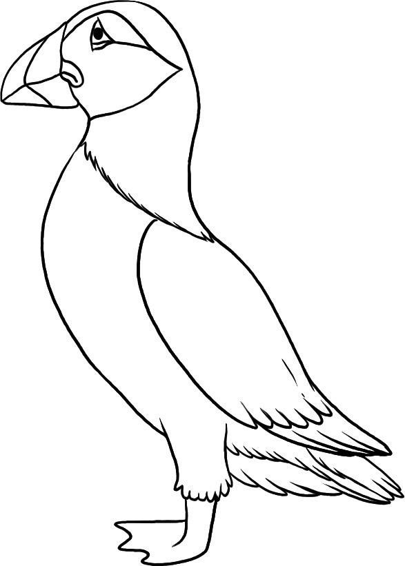 587x821 Top Puffin Coloring Pages For Toddlers Craft
