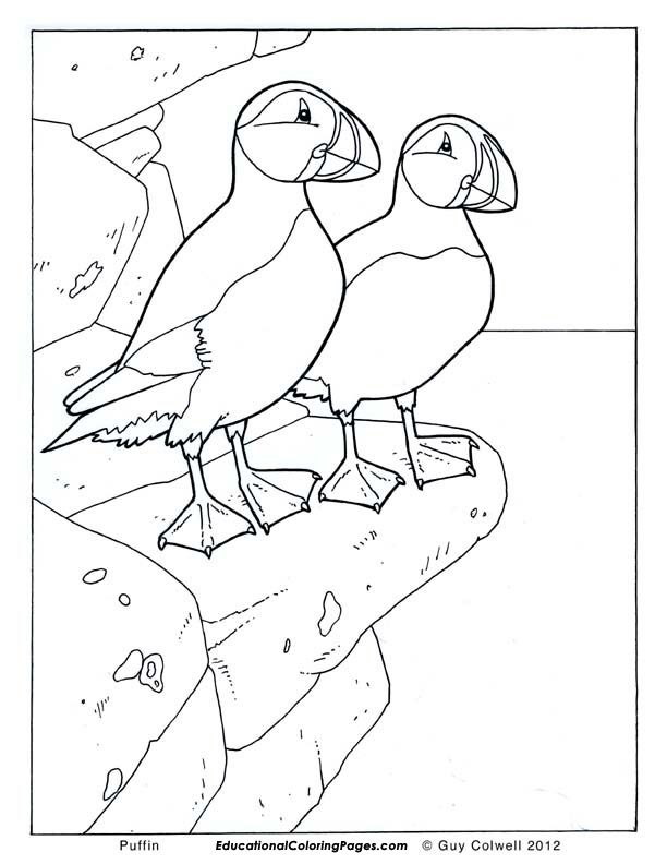 612x792 Birds Book One Educational Fun Kids Coloring Pages And Preschool