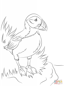 224x300 Download Atlantic Puffin Seabird Coloring Pages