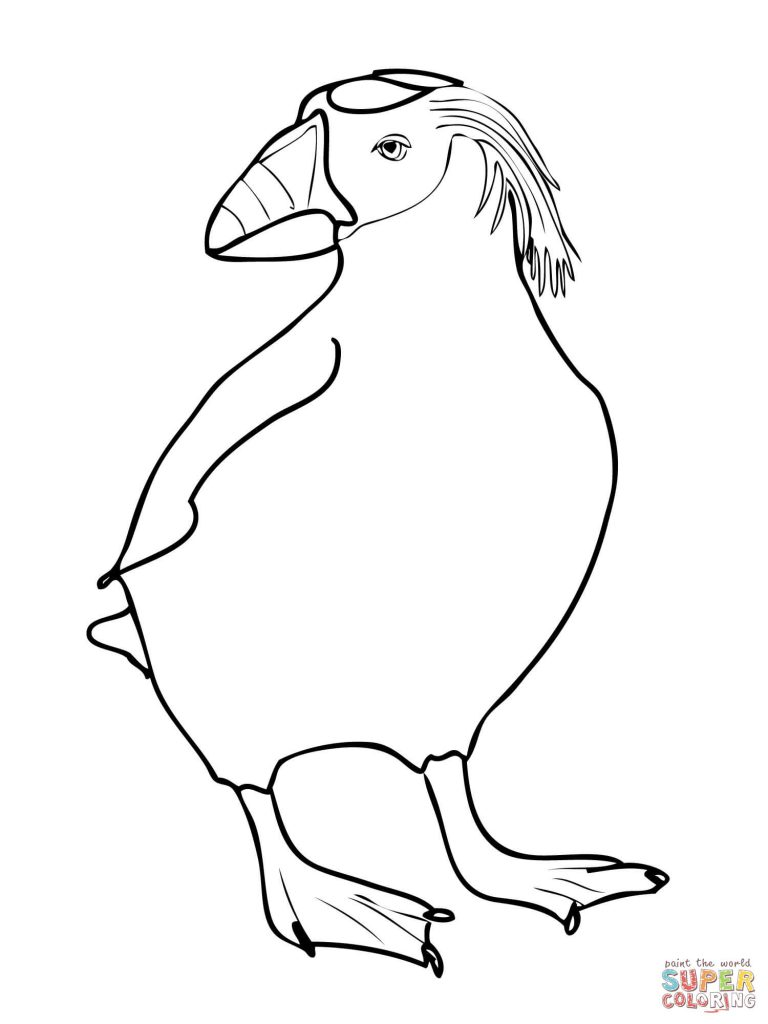 768x1024 Download Tufted Puffin Coloring Page