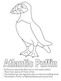 200x266 More Puffin Coloring Pages Puffinpalooza