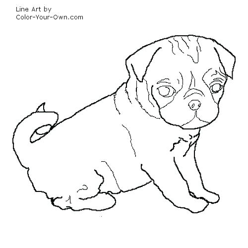 500x500 Pug Colouring Pages Printable Coloring Page In Jumper