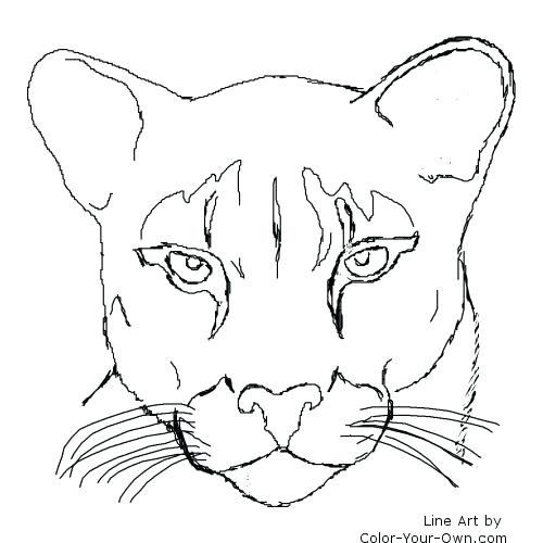500x500 Mountain Lion Coloring Pages Cougar Puma Mountain Lion My Coloring