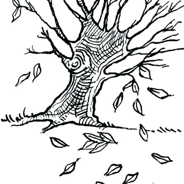 600x600 Oak Leaf Coloring Page Acorn Coloring Pages Oak Leaves Acorn Oak