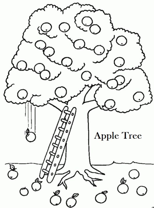 530x717 Best Plant Coloring Pages Images On Apple Tree