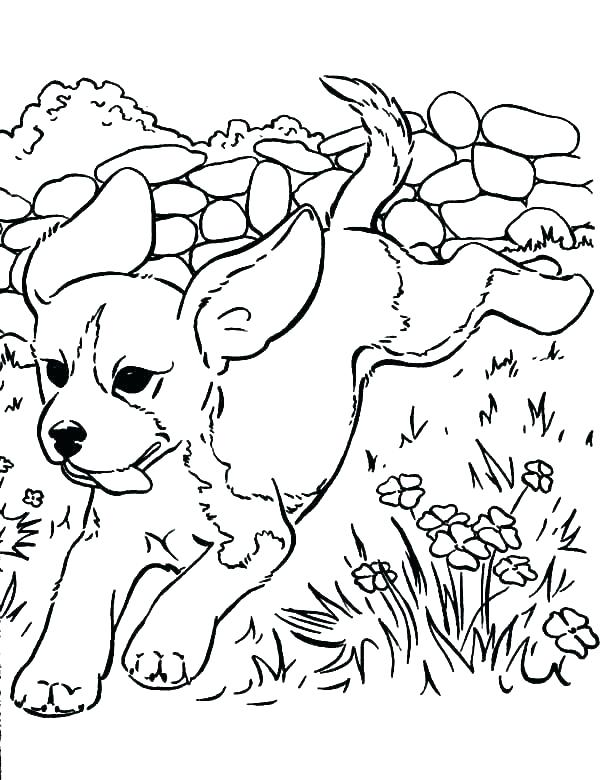 600x780 Kitten And Puppy Coloring Pages Coloring Page Puppy Puppy