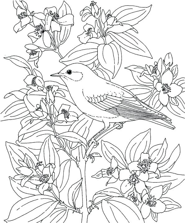 596x720 Id Bluebird Mountain Coloring Page Purple Kitty Pages Preschool