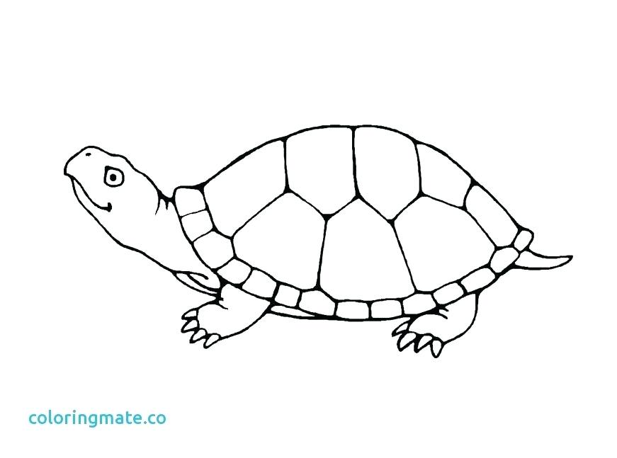 871x647 Coloring Pages Free Of The Cute Baby Turtle Coloring Pictures