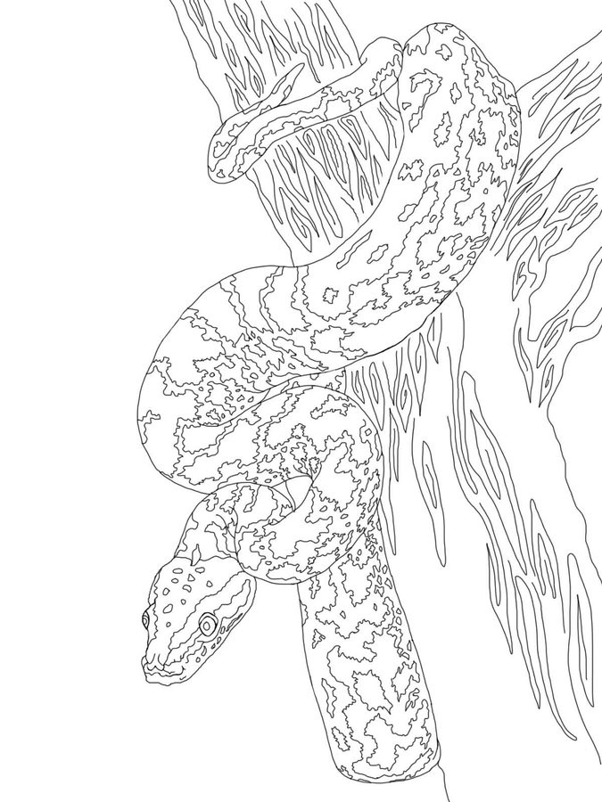 675x900 Coloring Pages Python, Printable For Kids Adults, Free