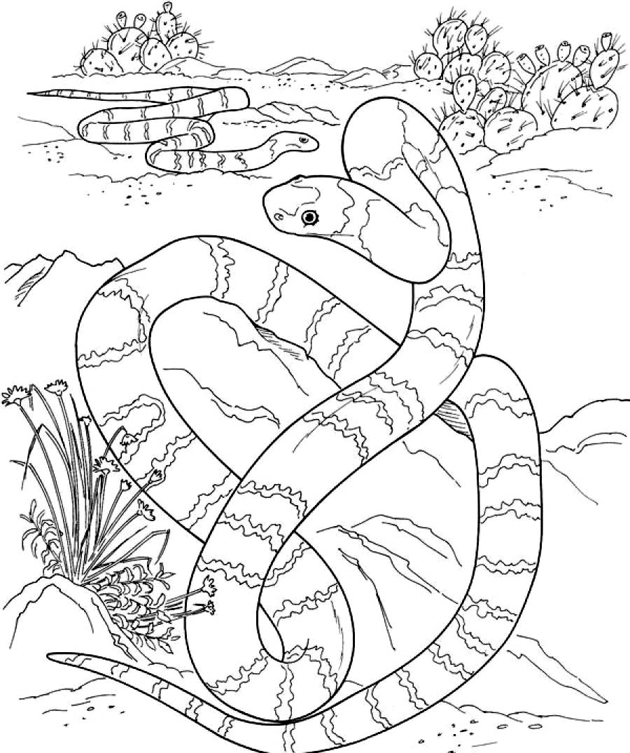 900x1075 Python Coloring Pages Realistic Printable Coloring Pages, Python