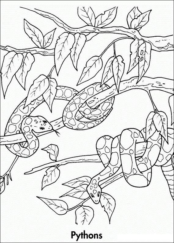 569x796 Python Colouring In Rainforest Study Python
