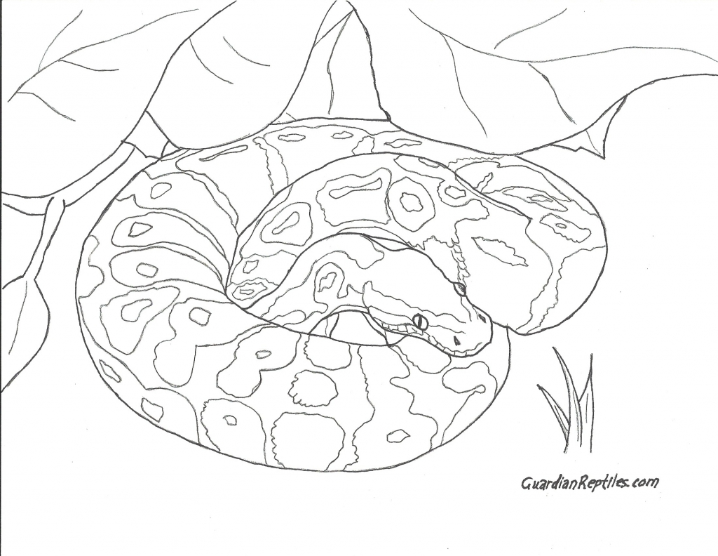 1024x792 Ball Python Coloring Pages