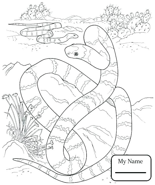 614x734 Ball Python Coloring Pages Rattlesnake Coloring Page Snake